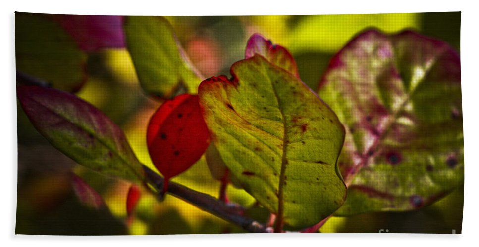 Fall Leaves Bath Sheet featuring the photograph Fall Leaves by Kim Henderson