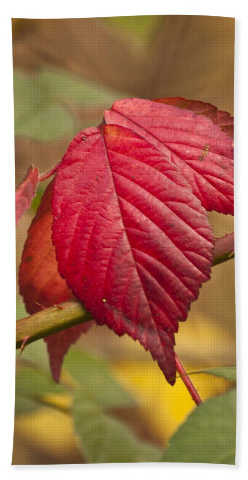 Autumn Leaves Hand Towel featuring the photograph Fall Leaves by Steve Purnell