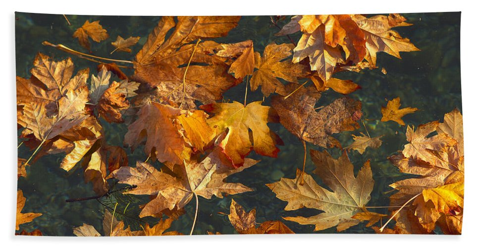Maple Leaves Bath Sheet featuring the photograph Fall Maple Leaves On Water by Sharon Talson