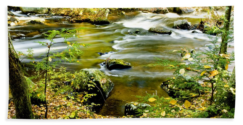Trees Bath Sheet featuring the photograph Fall Squared by Greg Fortier