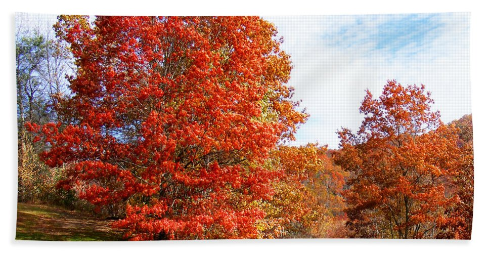 Fall Hand Towel featuring the photograph Fall Tree By The Road by Duane McCullough
