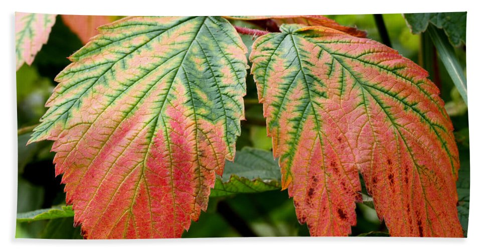 Doug Lloyd Hand Towel featuring the photograph Fall Veins by Doug Lloyd