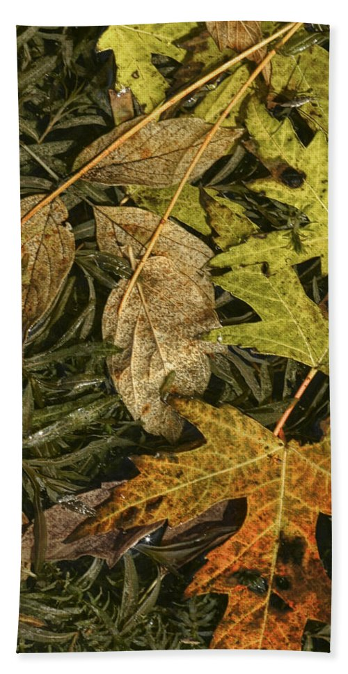 Art Bath Sheet featuring the photograph Fallen Autumn Leaves On The Shore Of Hall Lake by Randall Nyhof