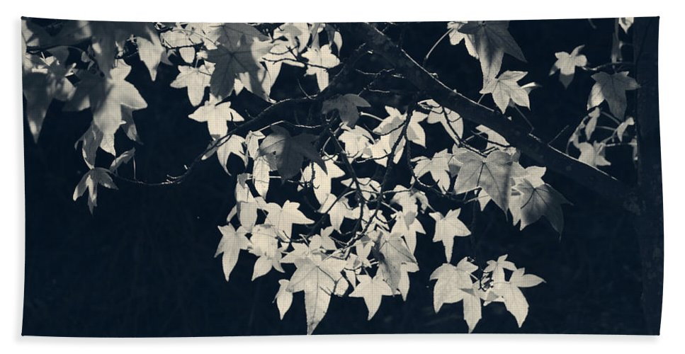 Trees Hand Towel featuring the photograph Falling Stars by Laurie Search