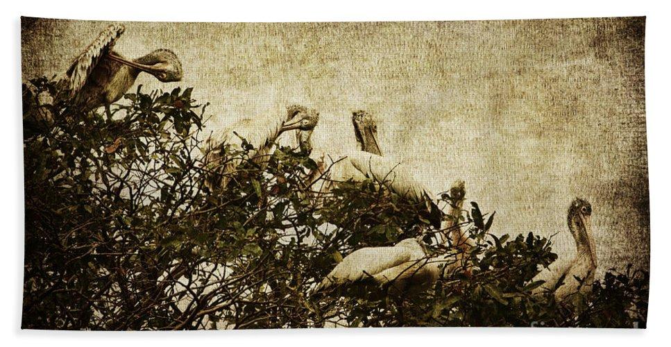 Pelican Bath Sheet featuring the photograph Family Tree by Andrew Paranavitana