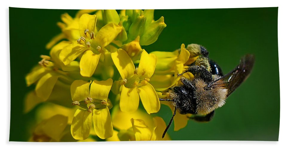 Bee Hand Towel featuring the photograph Fanfare For The Common Bumblebee by Lois Bryan