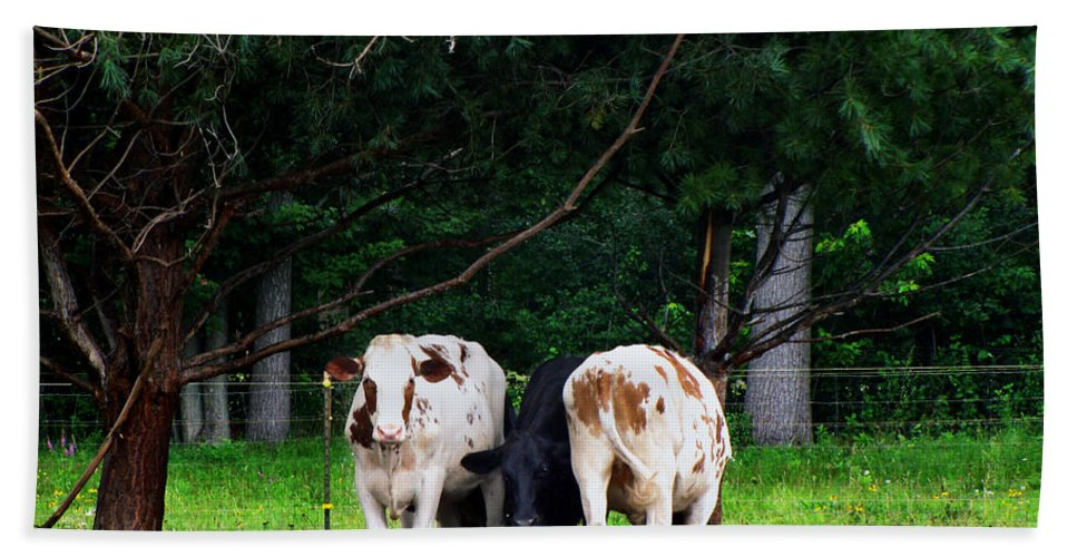 Animals Bath Sheet featuring the photograph Farm Cattle by Ms Judi