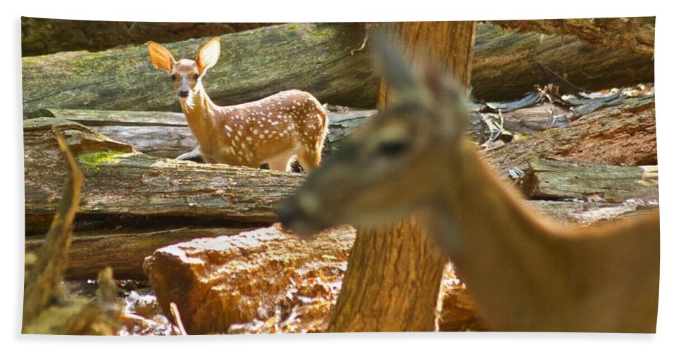Baby Bath Sheet featuring the photograph Fawn 2 7769 by Michael Peychich