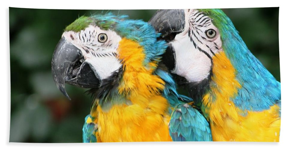Birds Bath Sheet featuring the photograph Feathered Friends by Nola Lee Kelsey