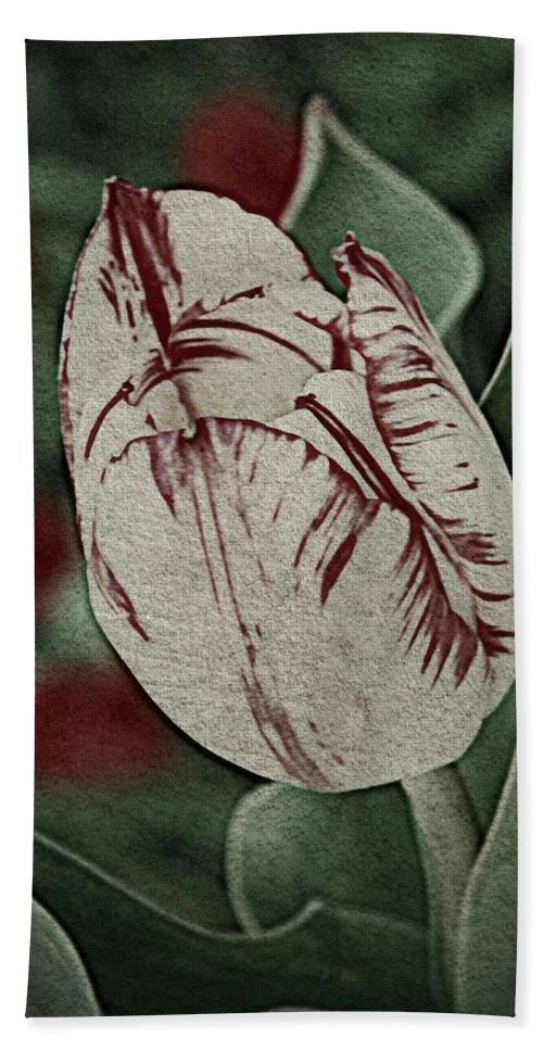 Nature Hand Towel featuring the photograph Feathered Markings by Chris Berry