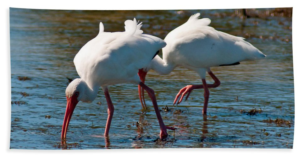 Terns Hand Towel featuring the photograph Feeding Time by Stephen Whalen