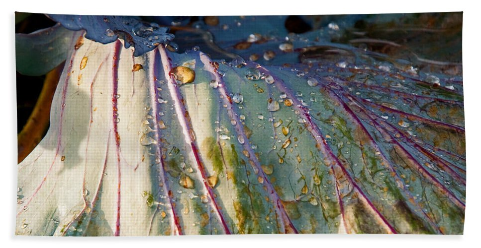Cabbage Bath Sheet featuring the photograph Feeling Fresh by Christine Stonebridge