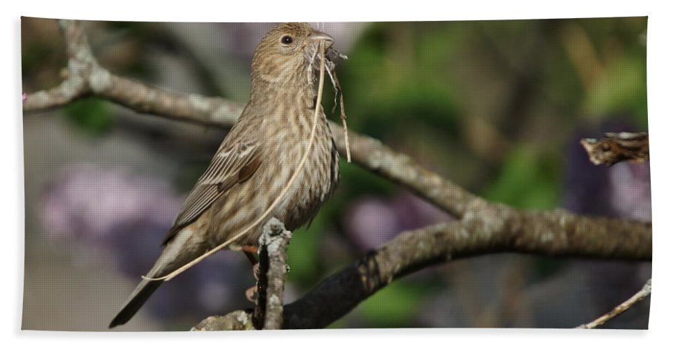 Female Bath Sheet featuring the photograph Female Finch by Alan Hutchins