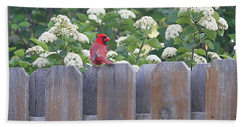 Cardinal Bath Sheet featuring the photograph Fence Top by Elizabeth Winter