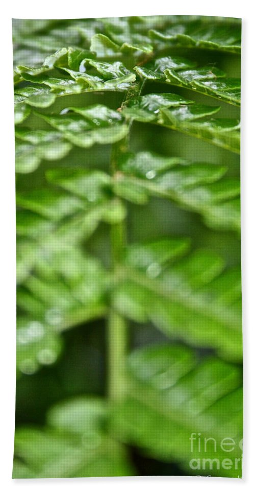 Tropical Plant Bath Sheet featuring the photograph Fern by Susan Herber