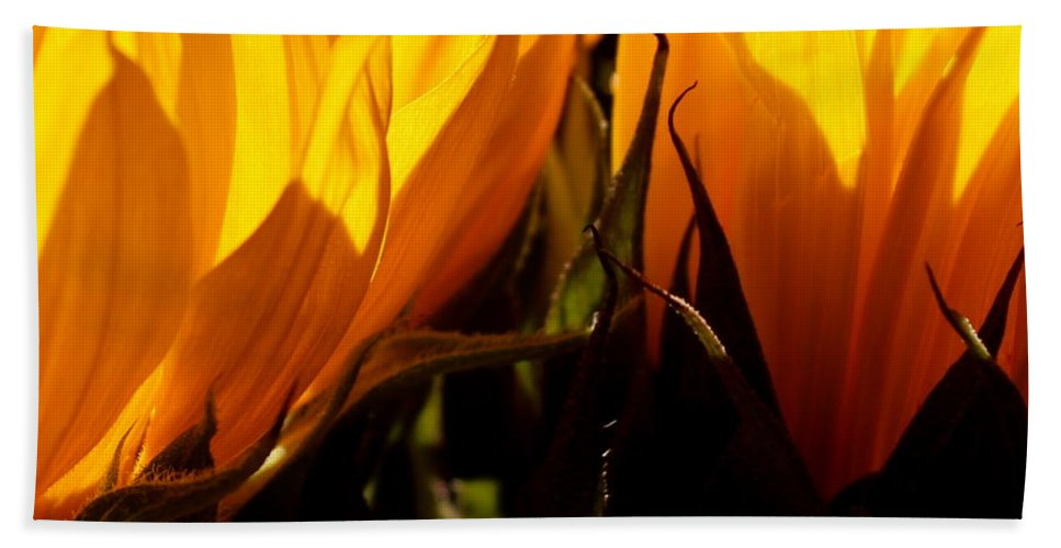 Fiery Bath Sheet featuring the photograph Fiery Sunflowers by Kume Bryant
