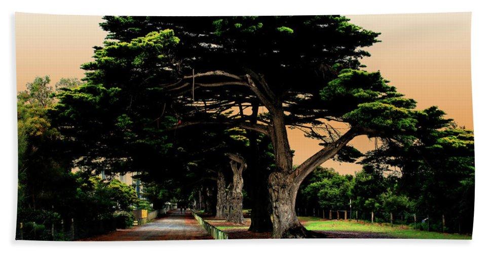 Fig Trees Bath Sheet featuring the photograph Fig Tree Lane by Douglas Barnard