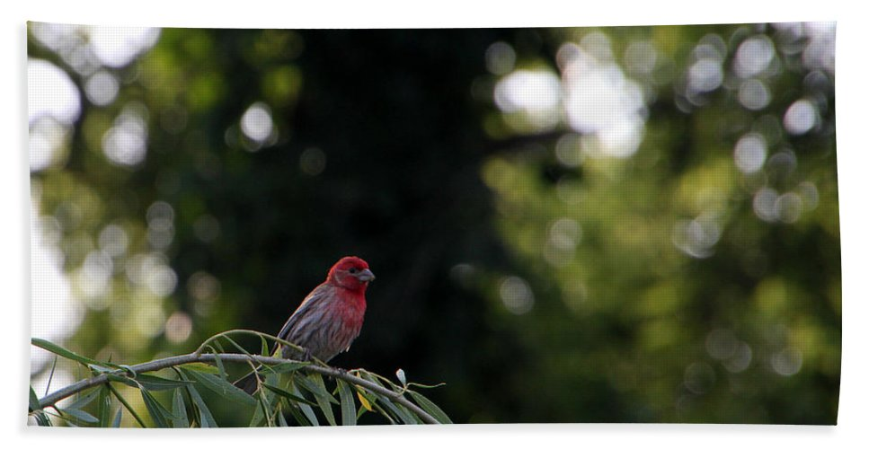 Tn Bath Sheet featuring the photograph Finch In The Willow by Ericamaxine Price