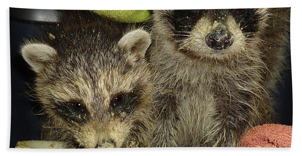 Raccoons Hand Towel featuring the photograph Finger Food by Art Dingo