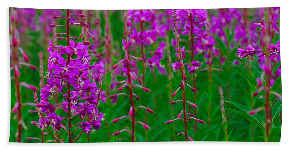 Epilobium Angustifolium Hand Towel featuring the photograph Fireweed by Tony Beck