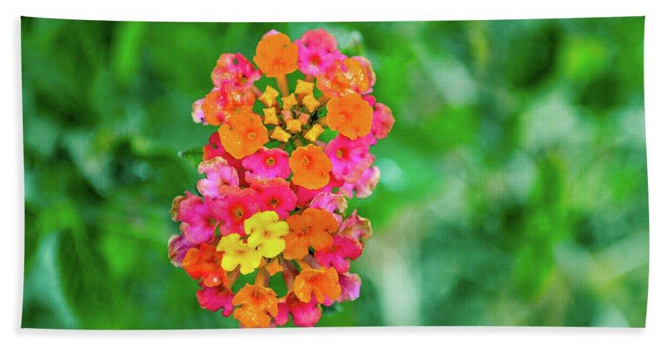 Flower Bath Sheet featuring the photograph Fireworks by Shannon Harrington