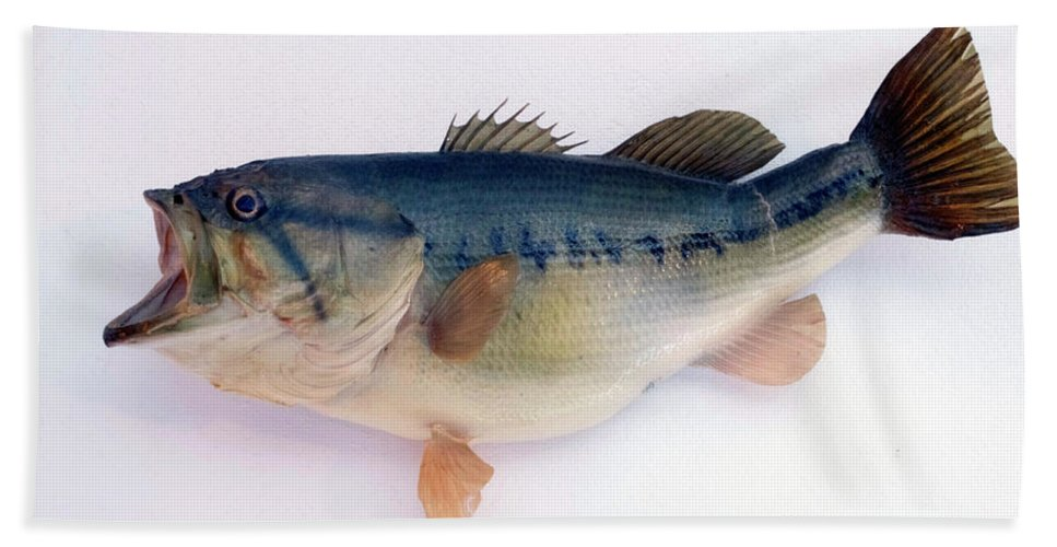 Animals Bath Sheet featuring the photograph Fish Mount Set 09 A by Thomas Woolworth