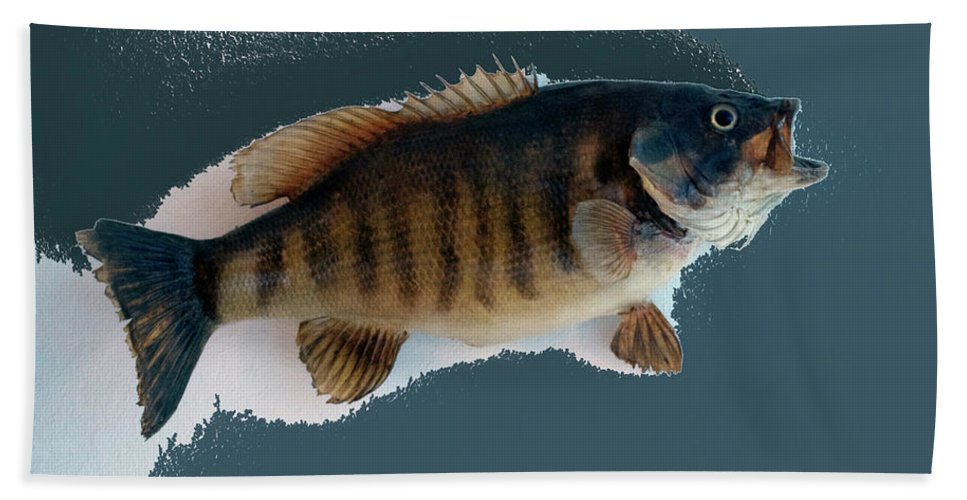 Animals Bath Sheet featuring the photograph Fish Mount Set 10 B by Thomas Woolworth