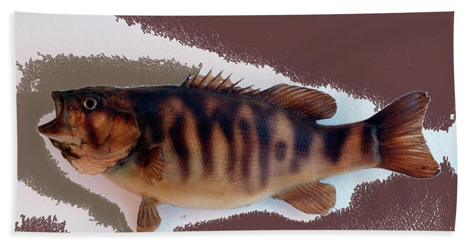 Animals Bath Sheet featuring the photograph Fish Mount Set 11 C by Thomas Woolworth