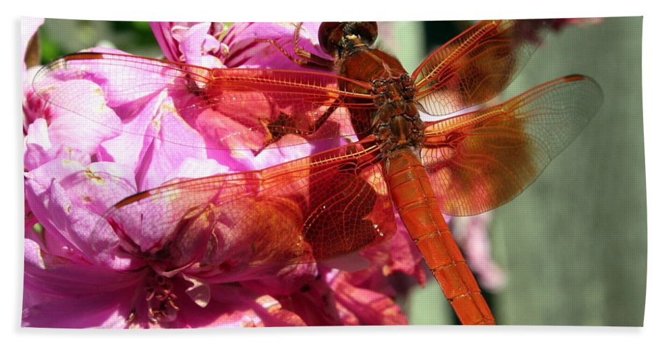Firecracker Skimmer Bath Sheet featuring the photograph Flame Skimmer Dragonfly by Laurel Talabere