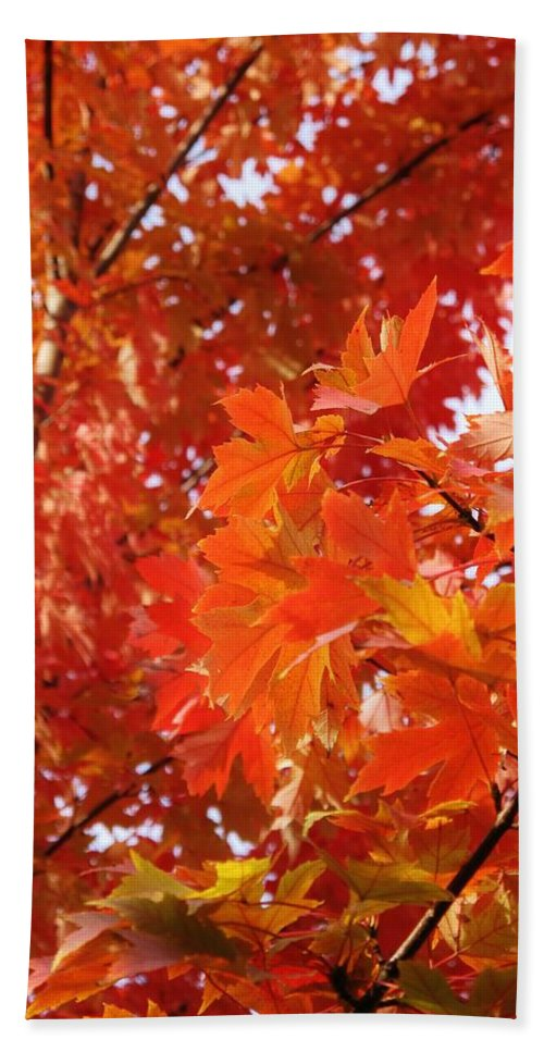 Maple Hand Towel featuring the photograph Flaming Maples by Ian MacDonald