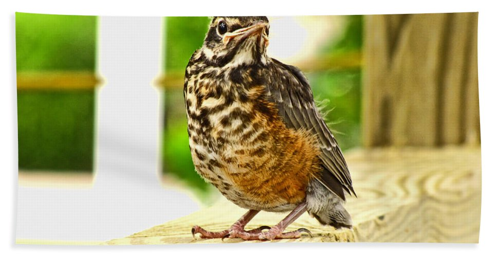 Nature Bath Sheet featuring the photograph Fledling Robin by Debbie Portwood
