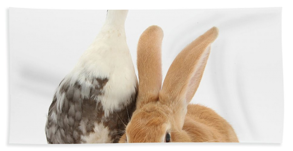 Nature Hand Towel featuring the Flemish Giant Rabbit And Call Duck by Mark Taylor