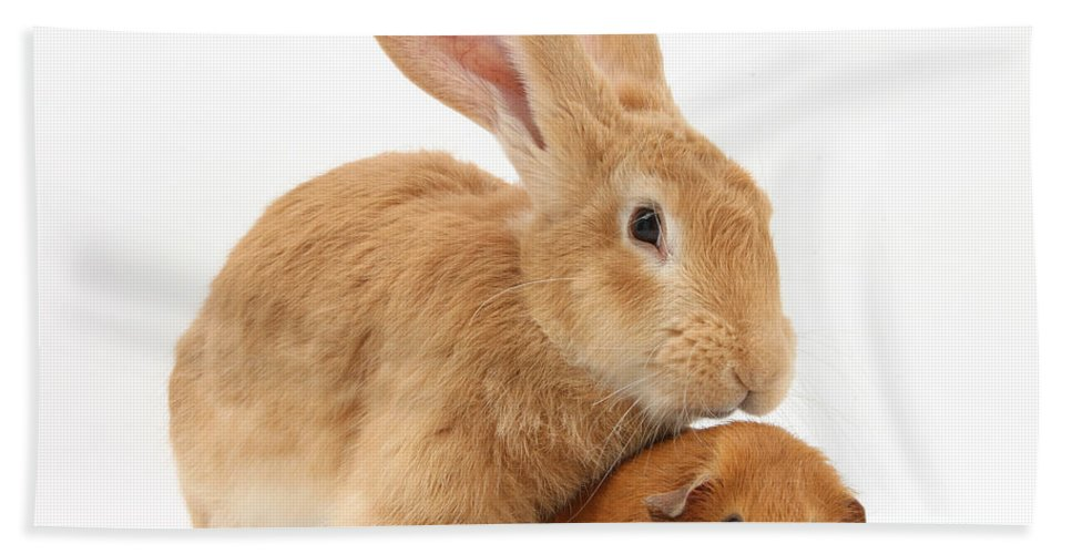 Nature Hand Towel featuring the photograph Flemish Giant Rabbit With Red Guinea Pig by Mark Taylor