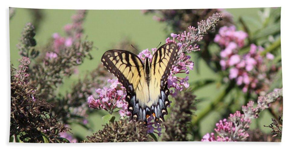 Butterfly Bath Sheet featuring the photograph Flitter - Butterfly - Swallowtail by Travis Truelove