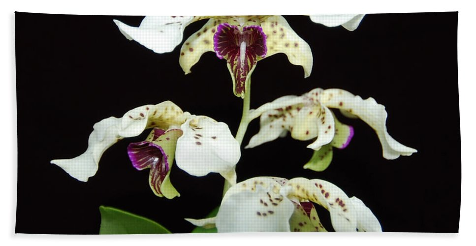 Flowers Bath Sheet featuring the photograph Flock Of Dendrobium by Terri Winkler