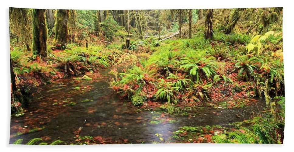 Hoh Rainforest Hand Towel featuring the photograph Flood In The Forest by Adam Jewell