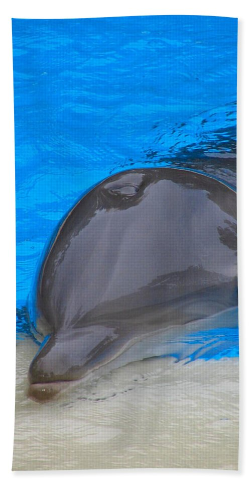 Dolphin Hand Towel featuring the photograph Published Secret Lives Dolphins by Art Dingo