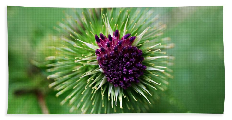 Floral Bath Sheet featuring the photograph Floral1 by Joe Faherty