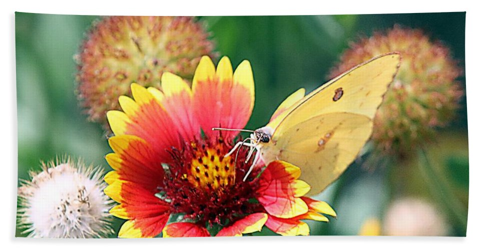 Indian Blankets Bath Sheet featuring the photograph Flower Butterfly by Elizabeth Winter