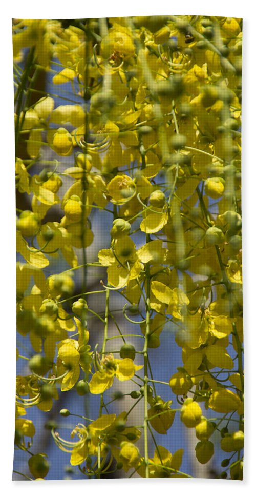 Yellow Hand Towel featuring the photograph Flower Curtain by Douglas Barnard