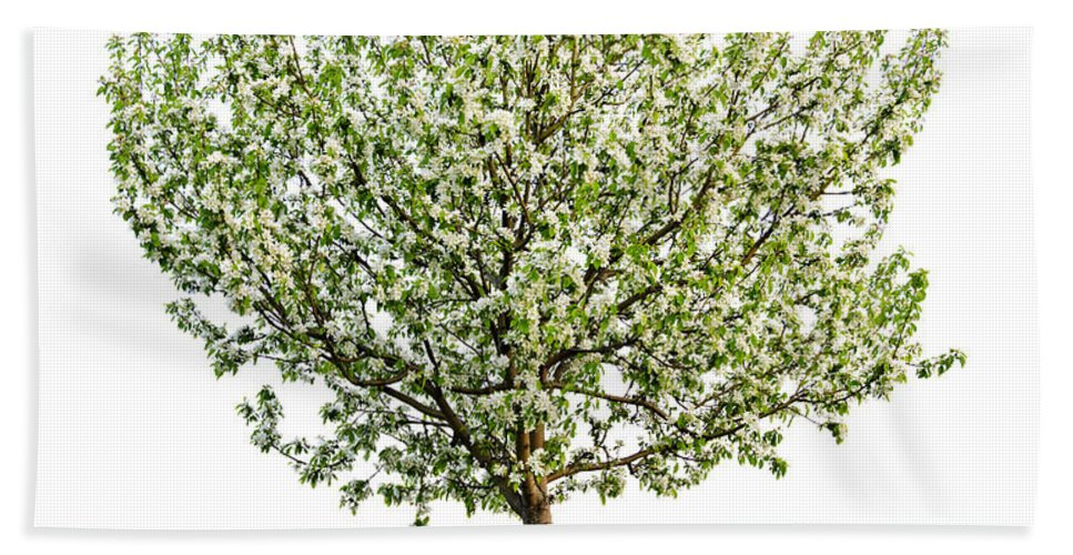 Tree Hand Towel featuring the photograph Flowering Apple Tree by Elena Elisseeva