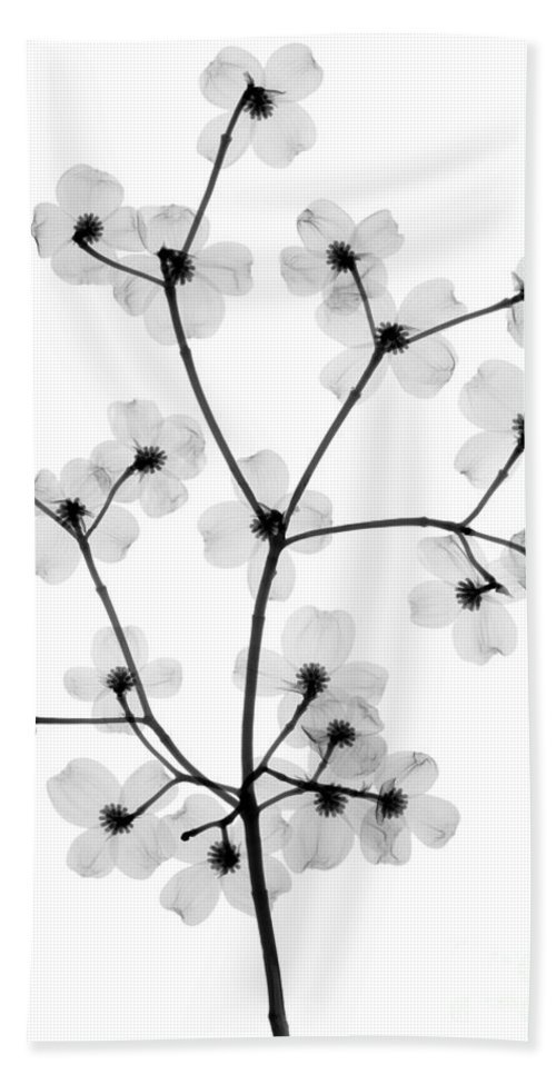 Tree Hand Towel featuring the photograph Flowering Dogwood, X-ray by Ted Kinsman
