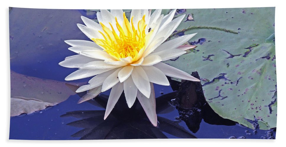 Lily Pads Bath Sheet featuring the photograph Flowering Lily-pad- St Marks Fl by Marilyn Holkham