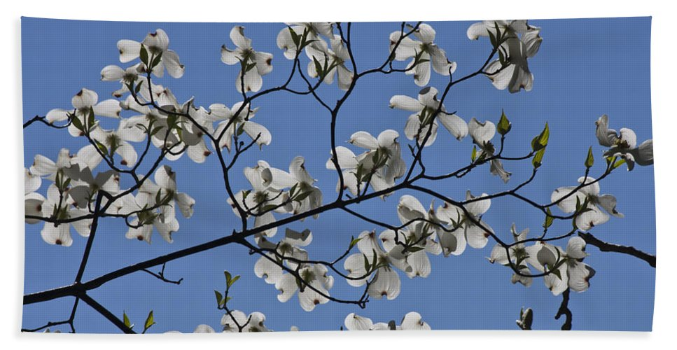 Flowering Dogwood Hand Towel featuring the photograph Flowering White Dogwood by Teresa Mucha