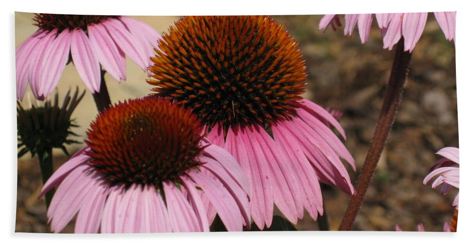 Coneflowers Bath Sheet featuring the photograph Coneflowers by Megan Cohen