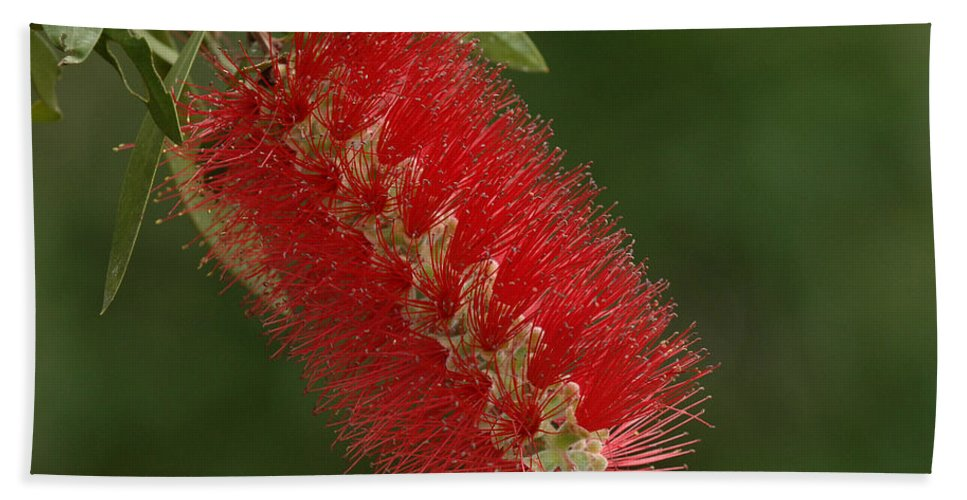 Flower Bath Sheet featuring the photograph Flowers Of New Zealand 1 by Bob Christopher