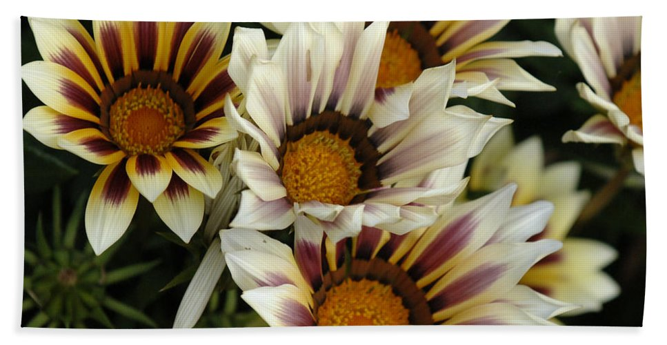 Flower Bath Sheet featuring the photograph Flowers Of New Zealand 2 by Bob Christopher