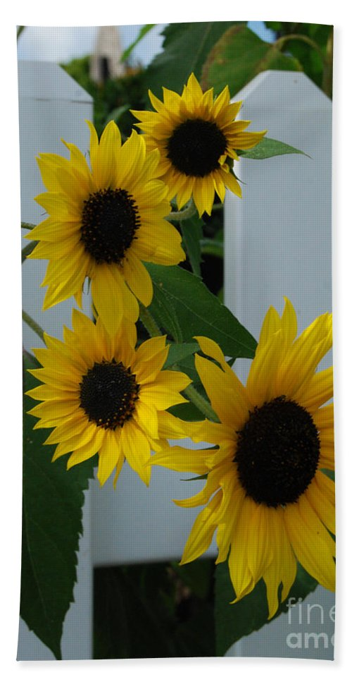 Sunflowers Bath Sheet featuring the photograph Flowers On A Fence by Grace Grogan