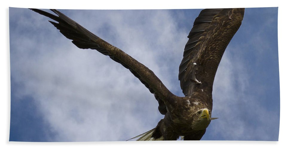 White_tailed Eagle Bath Sheet featuring the photograph Flying European Sea Eagle I by Heiko Koehrer-Wagner