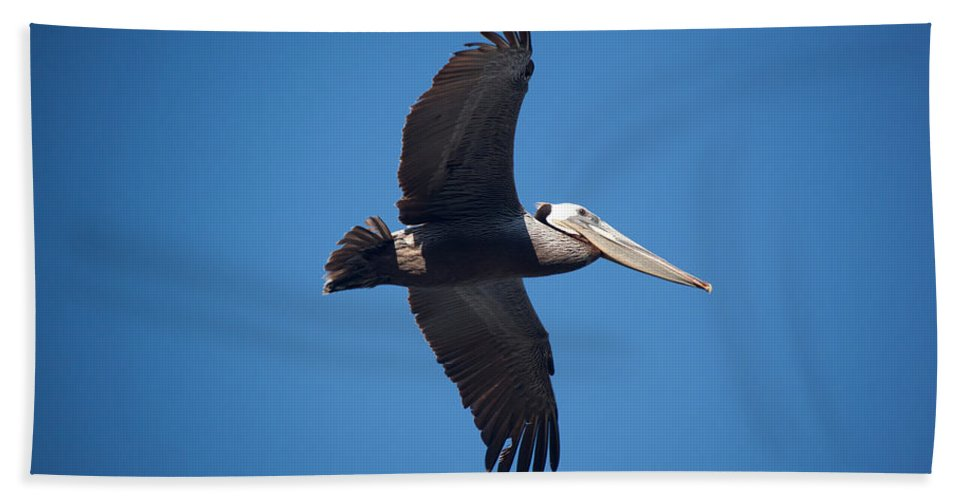 Pelican Bath Towel featuring the photograph flying Pelican by Ralf Kaiser
